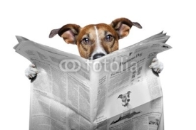 Naklejki dog reading a newspaper