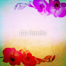 Fototapety Lovely orchid background