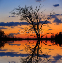 Fototapety leafless tree on sunset background