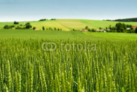 Obrazy i plakaty Wheat field