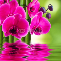 Fototapety orchid flower with bamboo and reflection in water