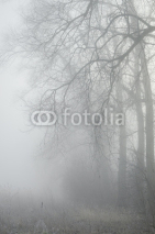 Fototapety trees in misty forest