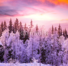 Fototapety Winter forest