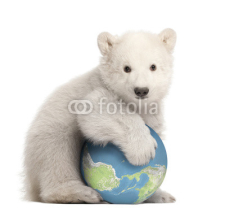 Fototapety Polar bear cub, Ursus maritimus, 3 months old, with globe