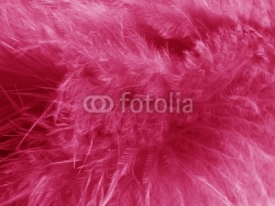 Fototapety plumes roses