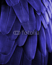 Fototapety Blue Feathers