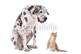 Naklejki Cat and Dog