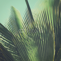 Naklejki Abstract tropical vintage background. Palm leaves in sunlight.