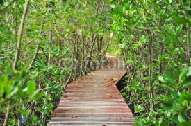 Obrazy i plakaty Wooden Pathway in Mangrove Forests