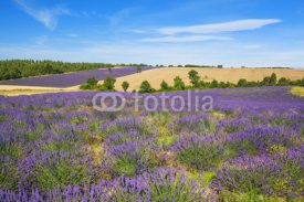 Fototapety Lavender and wheat field