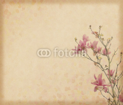 Fototapety magnolia flower with Old antique vintage paper background