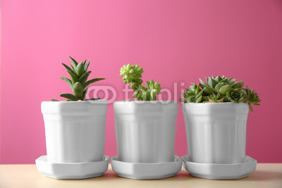 Pots with succulents on color background