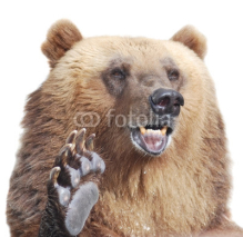 Fototapety The brown bear welcomes with a paw isolated on white