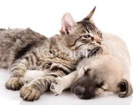 Fototapety Kitten and a pup together. isolated on white
