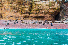 Fototapety South American Sea lions relaxing on rocks of Ballestas