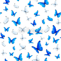 Obrazy i plakaty Seamless background with butterflies