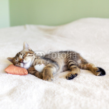 Fototapety Small Kitty With Red Pillow and Mouse