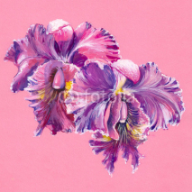 Naklejki Purple orchid isolated on pink background.Watercolors