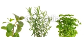 Fototapety Fresh herbs on white background