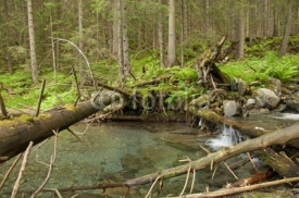 Fototapety  Mountain river with a small cascade in pine forest