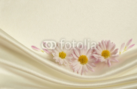 Fototapety White background with daisies