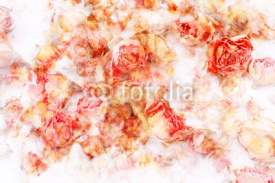Naklejki Dry roses beautiful, artistic background