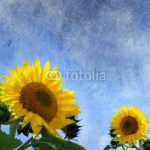 Naklejki sunflowers on grungy background