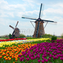 Fototapety two dutch windmills over  tulips field