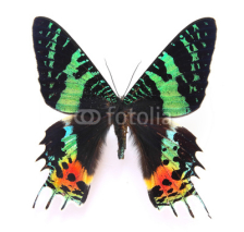 Fototapety HD Beautiful specimens of  butterflies