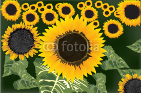 Naklejki yellow sunflowers field illustration