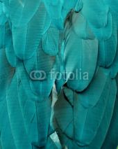 Naklejki Macaw Feathers (Teal and Blue)