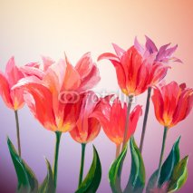 Fototapety Tulips. Spring flowers invitation template card