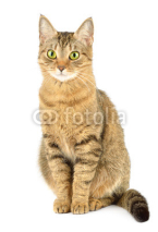 Fototapety Cat isolated on white