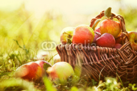 Fototapety Organic apples in summer grass