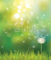 Fototapety Vector of spring background with white dandelion.