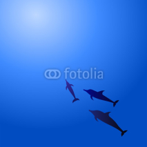 Fototapety Dolphins in water