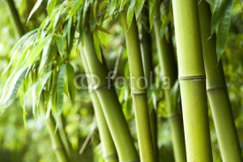 Naklejki Bamboo forest background
