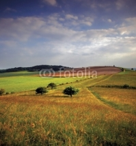 Obrazy i plakaty Buckinghamshire Chilterns Pitstone Hill