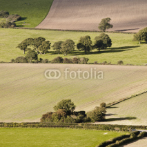Fototapety South Downs patchwork fields