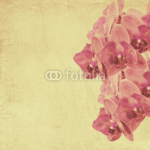 Naklejki textured old paper background with magenta phalaenopsis