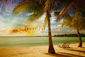 Obrazy i plakaty Beautiful marine landscape with tree on a pristine beach