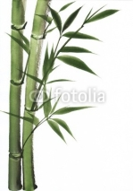 Fototapety Watercolor painting of bamboo