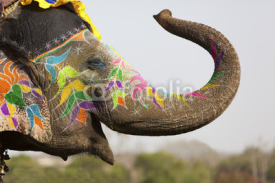 Fototapety Decorated elephant at the elephant festival in Jaipur
