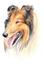 Fototapety watercolor - collie