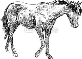 Fototapety sketch of horse