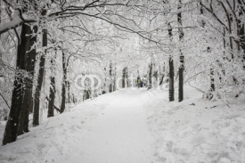 Fototapety Winter in Beskidy mountains near Szyndzielnia, Klimczok and Blatnia, Beskid Slaski, Poland