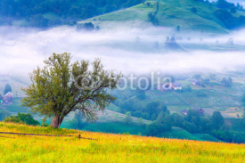 Fototapety Lonely tree in the misty morning in mountains