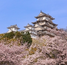 Obrazy i plakaty Japanese castle and Beautiful pink cherry blossom shot in japan