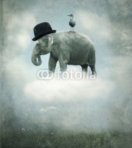 Fototapety Fantasy elephant flying