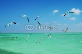 Fototapety The seagull flying over the sea